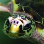 sea turtles2