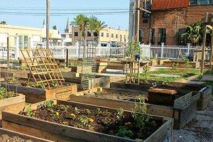 Deborah's-Community-Garden