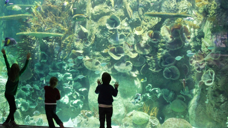 Wildlife Adventures at Moody Gardens Summer Camps | | Island Guide ...
