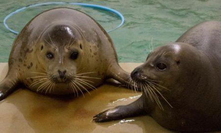 Galveston TX Moody Gardens seals